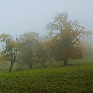 ....podzimní deštivá....