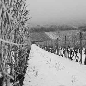 zima vo vinohrade 2