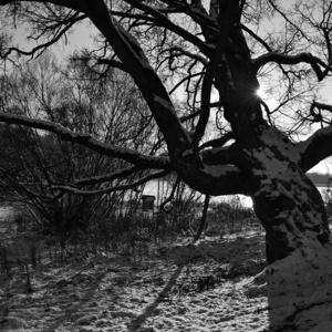 spoza stromu
