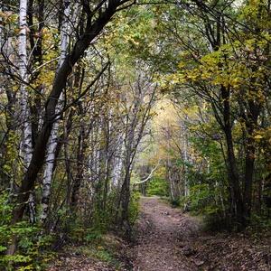jesenné chodníčky