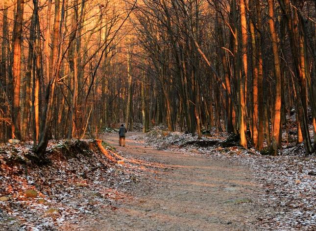 farebným lesom