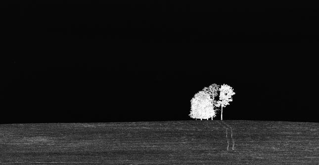 cesta a stromy
