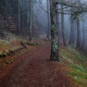 farebným lesom v daždi