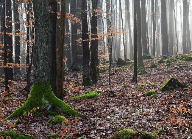 januárový les