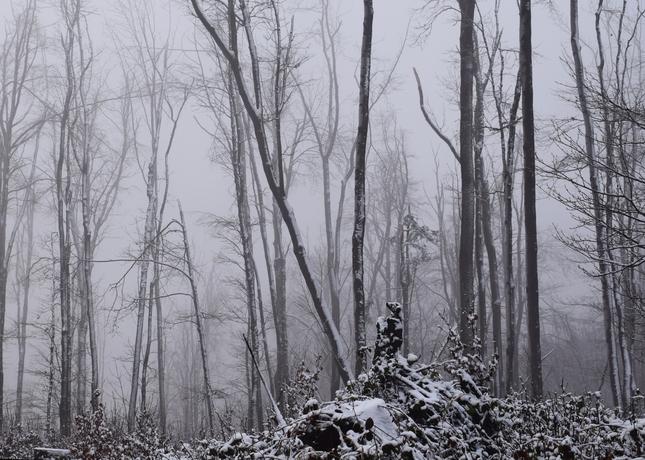 novoročným lesom