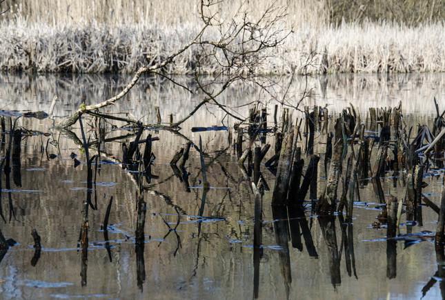 zabudnuté jazero