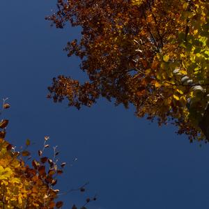 jesenne spektrum