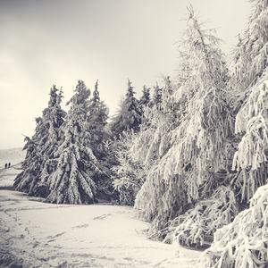 Zima...Sneh