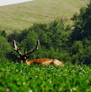 siesta v tráve