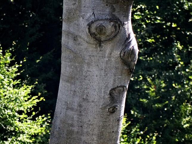 bubák z lesa
