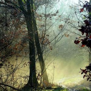 ked les dýcha