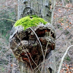 ENT -  pastier stromov