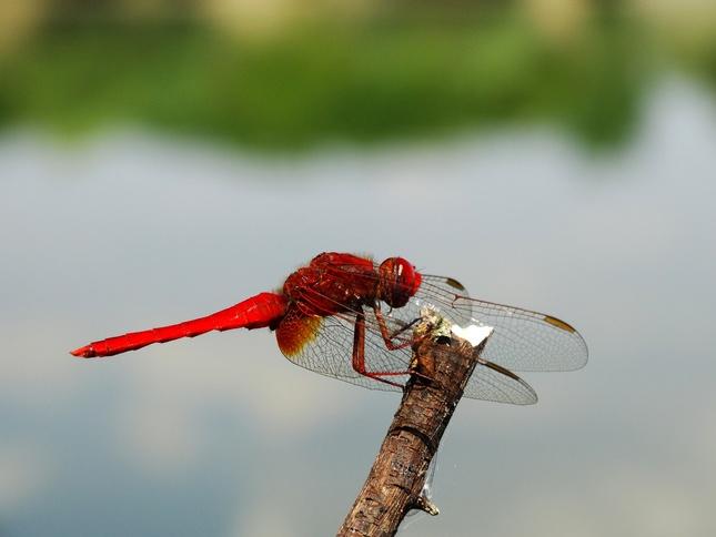 červený barón