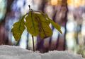 Život v snehu