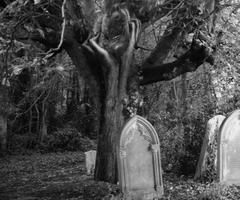 Výkrik zo stromu