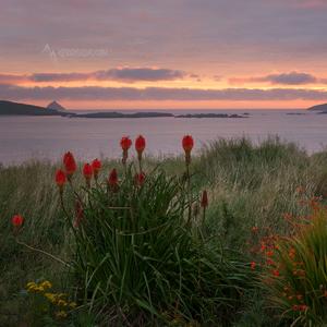 kvetinové pobrežie