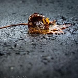Po daždi 2