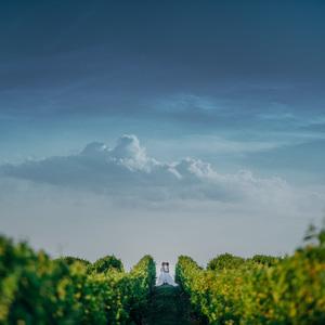 Láska mezi vinohrady