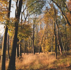 jesenles