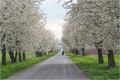 jaro na Hané