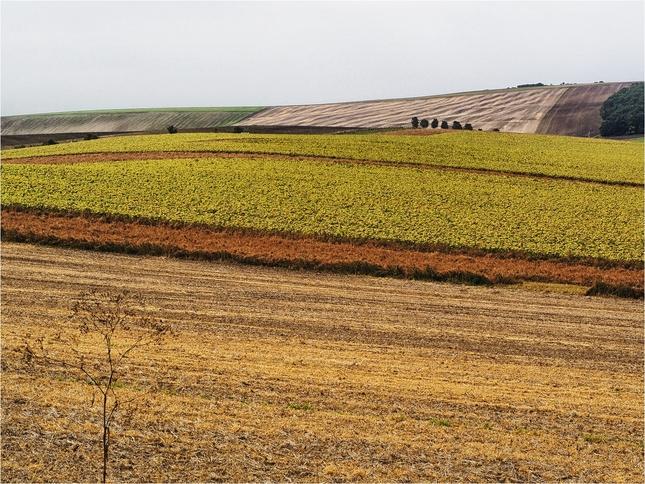 krajina u Bučovic