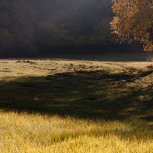 z jesennej prechádzky