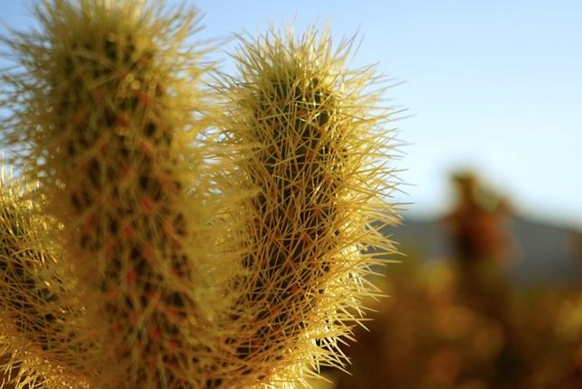 cactusssss
