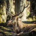 Spokojny kral lesa