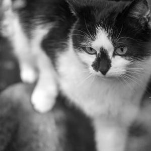 mačka v akcii