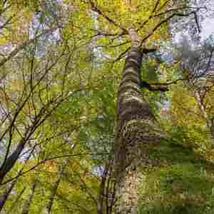 potulky lesom 3
