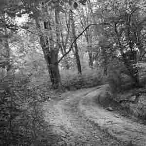 potulky lesom 1
