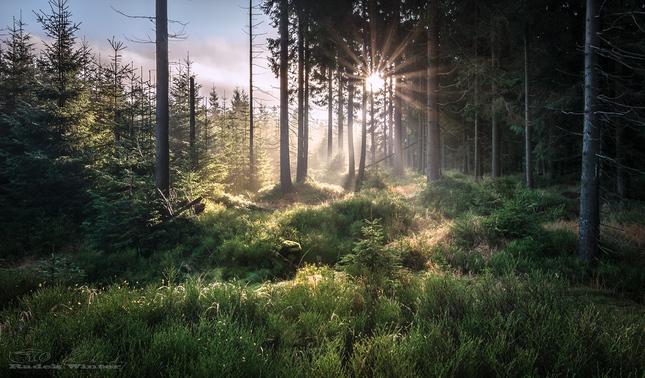 Lesní