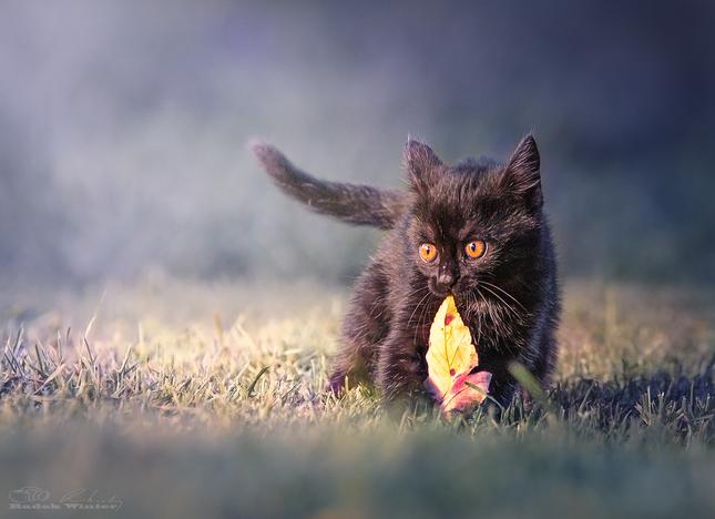 První podzim