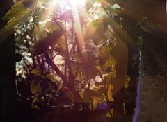 Slnko v hrozne