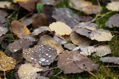 Jesen v plnom prude