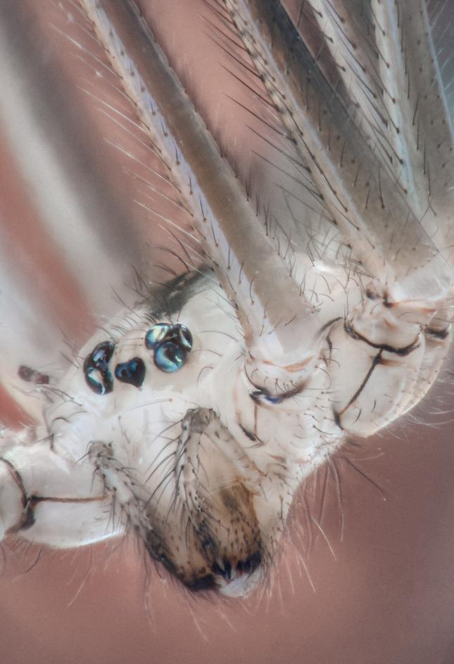 Hajzel pavúk II