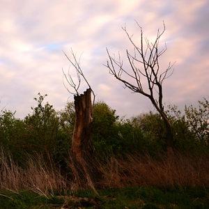 Zakliati v dreve