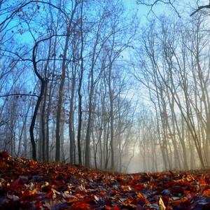 v lese