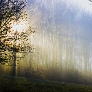 farby zahmleného lesa