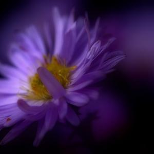 ,studie v lila.