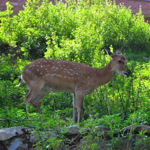 Bambi :))