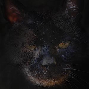 Nočný predátor