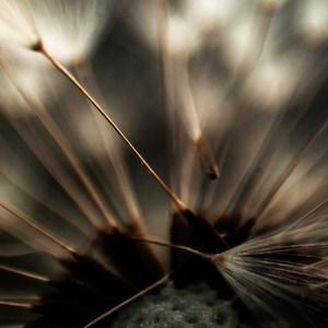 minimal flora