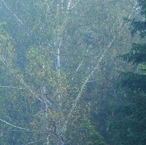 Stromy v hmle