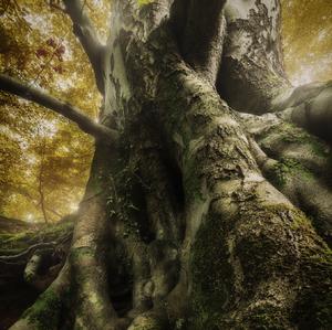 Tajny zivot stromov