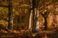 Slnecne jesenne popoludnie