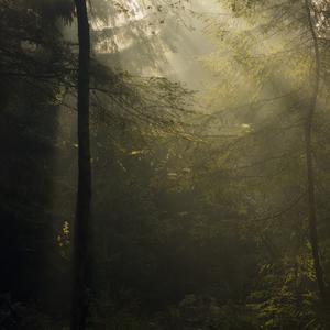 Takny zivot stromov