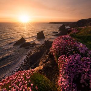 Kvety mora