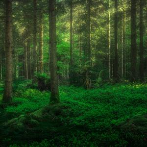 Do lesa!