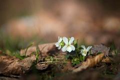 S vôňou jari ...